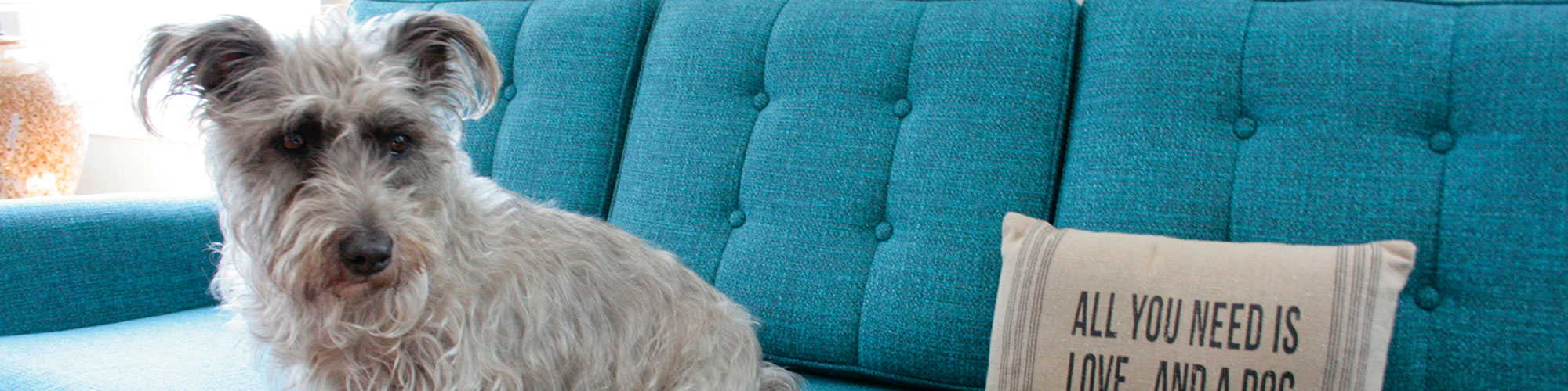 Pet Friendly Furniture & Fabrics | Joybird For Allie Jade Sofa Chairs (View 11 of 25)