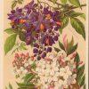 Botanical Prints Etsy (Photo 7 of 20)