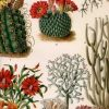 Botanical Prints Etsy (Photo 10 of 20)