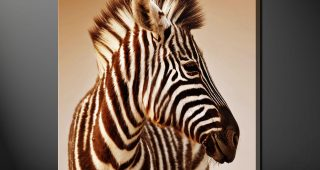 Zebra Wall Art Canvas